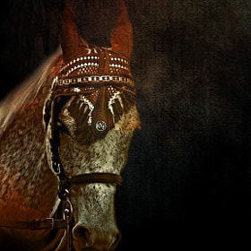 The horse by Duilio Pianelli (Duiliopianelli)) on 500px.com