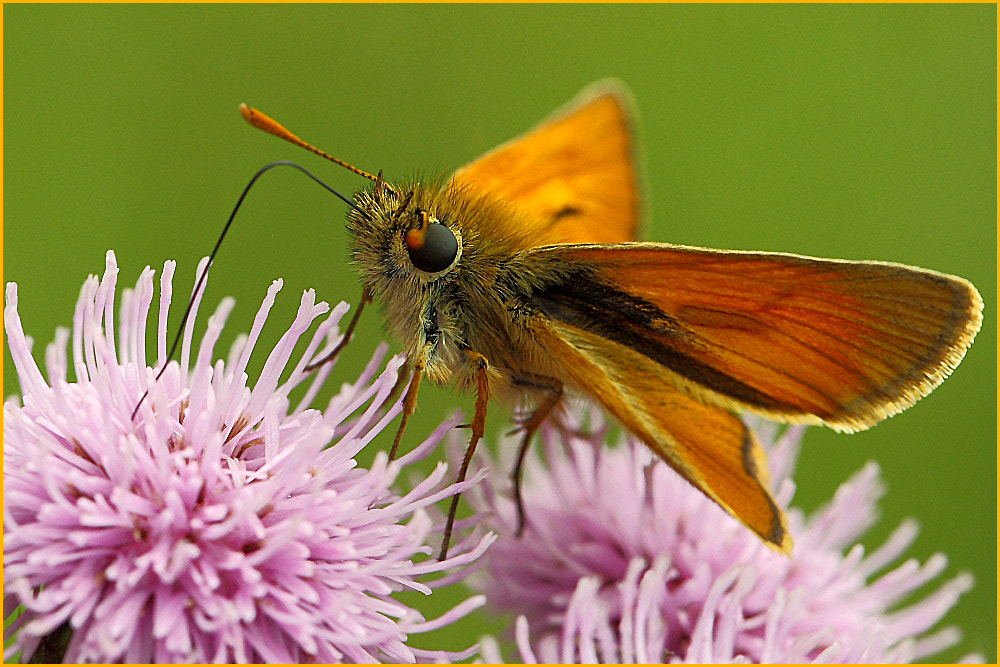 Photograph skipper by colin beeley on 500px