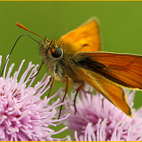 skipper by colin beeley (colinsphotos)) on 500px.com