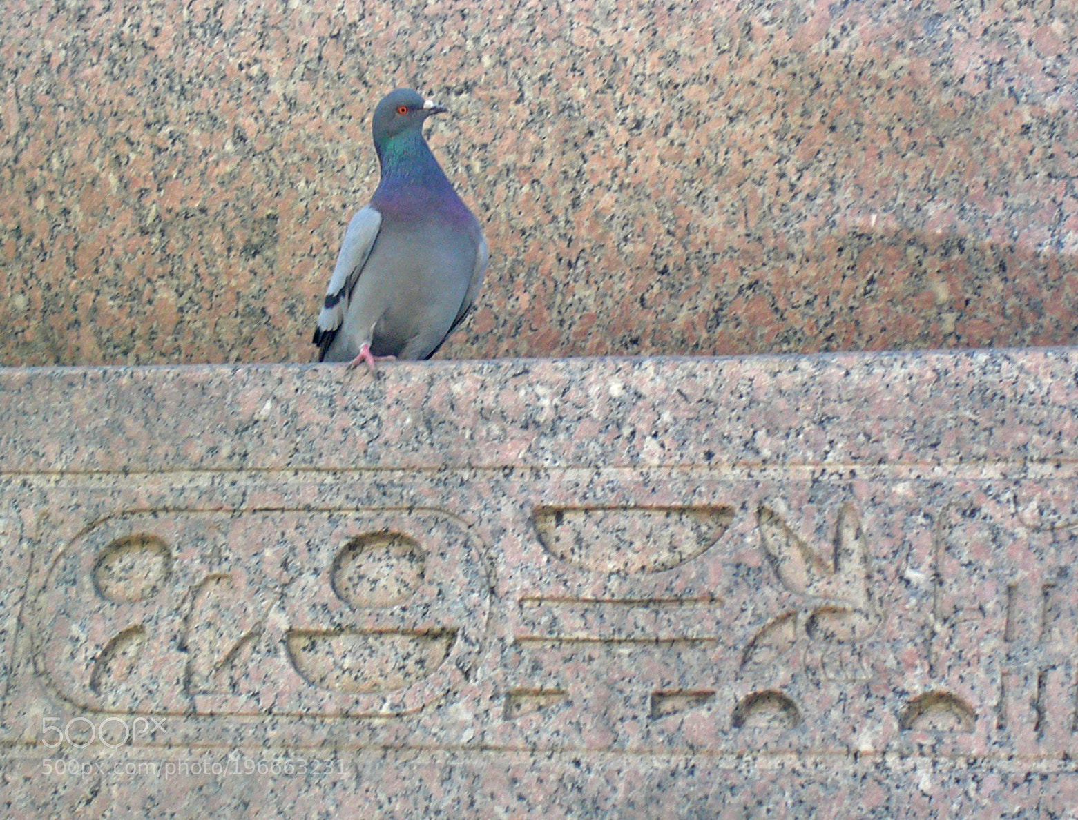 Dove and hieroglyphs