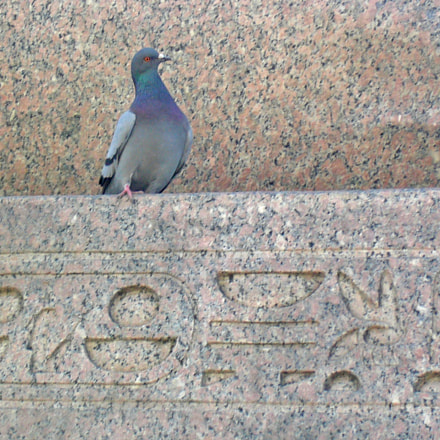 Dove and hieroglyphs, Panasonic DMC-LC50