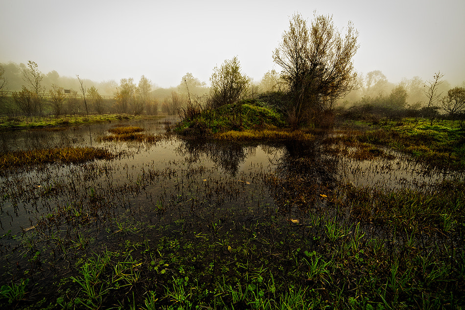Photograph autumn swamp by Alberto Di Donato on 500px