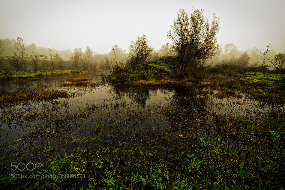 Photograph autumn swamp by Alberto Di Donato on 500px
