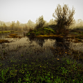 autumn swamp by Alberto Di Donato (albydido)) on 500px.com