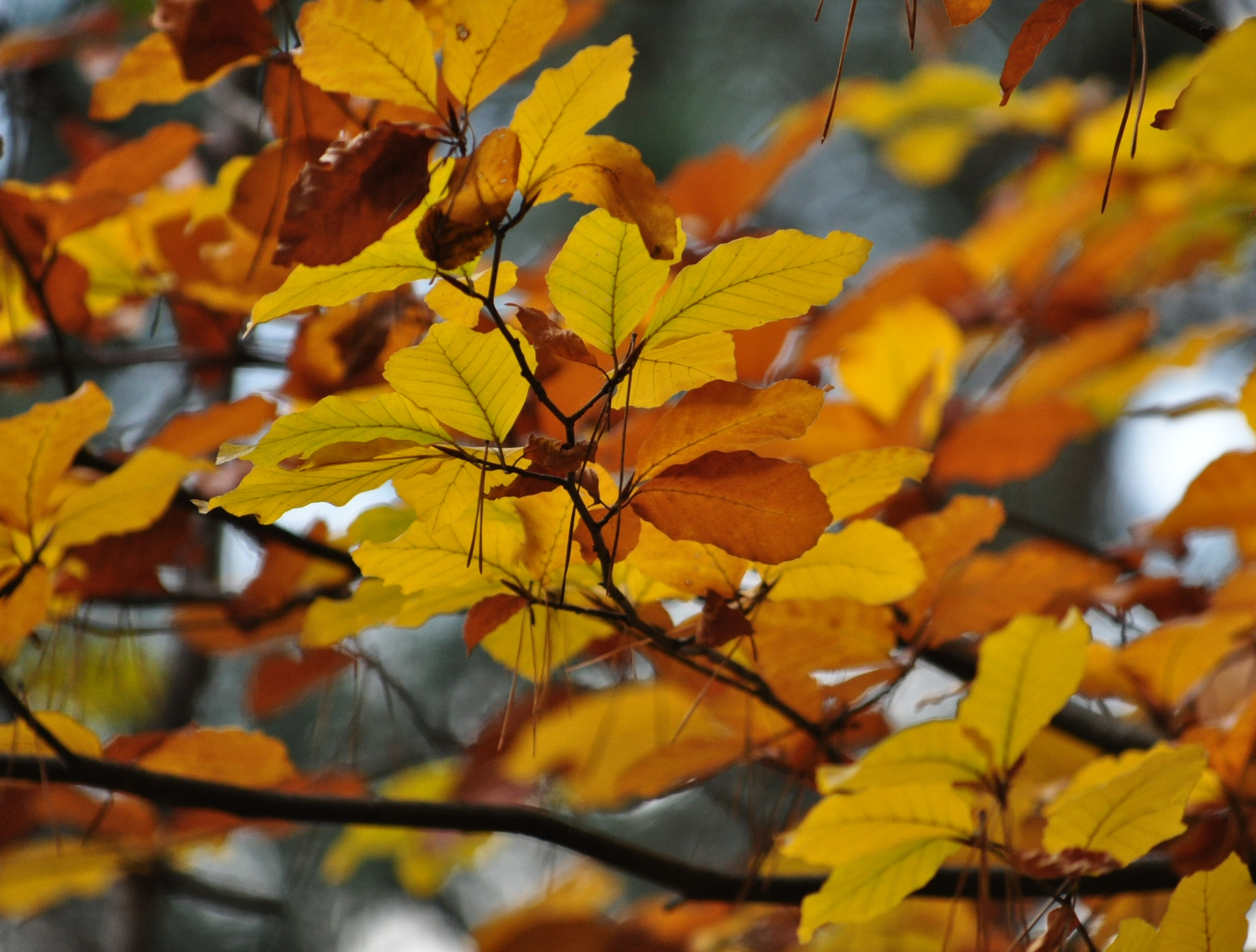 Photograph Leaves in color by Olivia Dodon on 500px