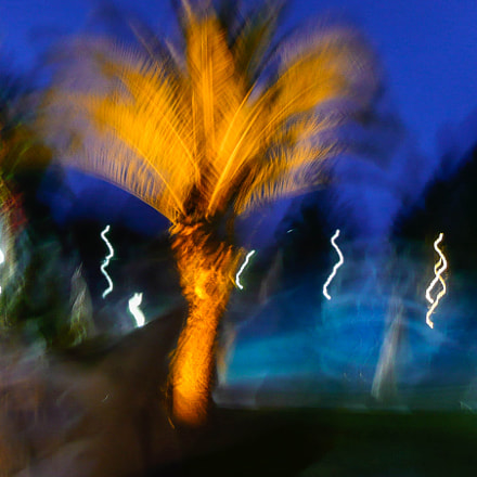 Festive Palm Tree, Panasonic DMC-TZ2