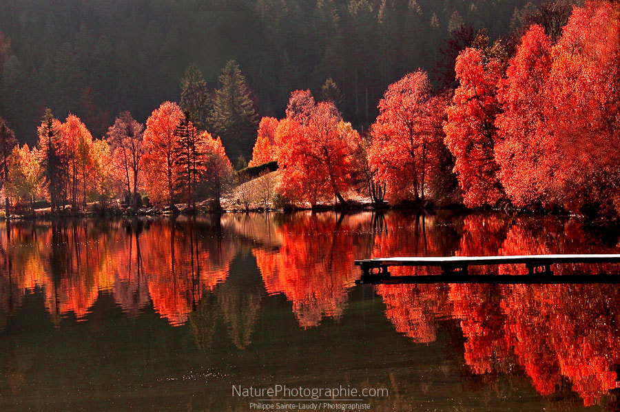 Photograph Trees vs Trees by Philippe Sainte-Laudy on 500px