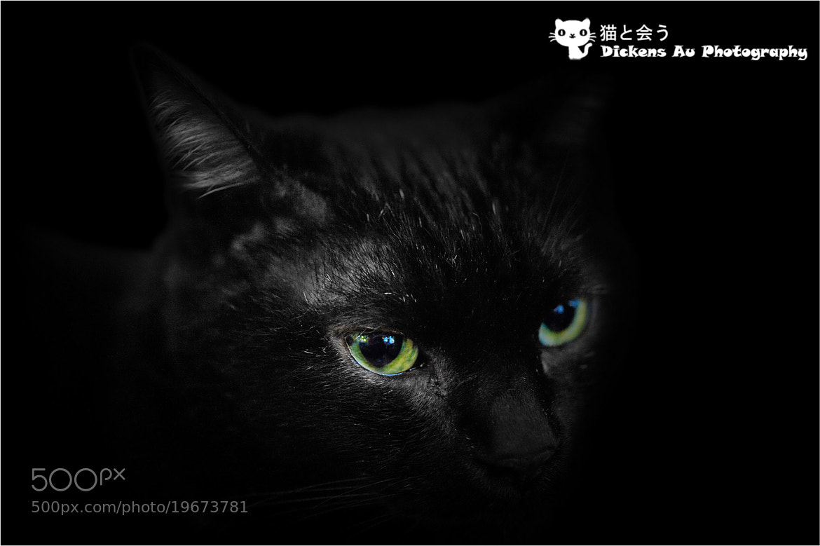 Photograph Dark Killer by Dickens Au on 500px