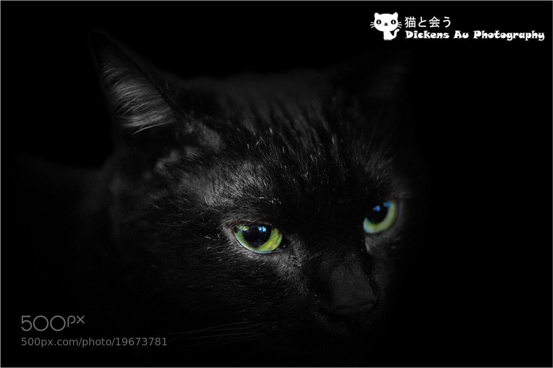 Photograph Dark Killer by Dickens Au on 500px