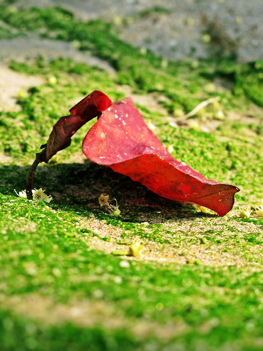 Photograph Red Leaves by Thita Mateo on 500px