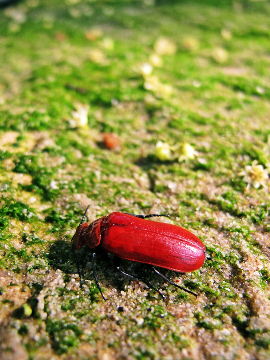 Photograph Red Bug by Thita Mateo on 500px