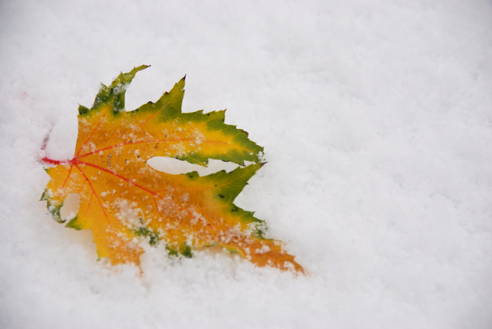 Photograph Cold leaf by Charlotte Frey on 500px
