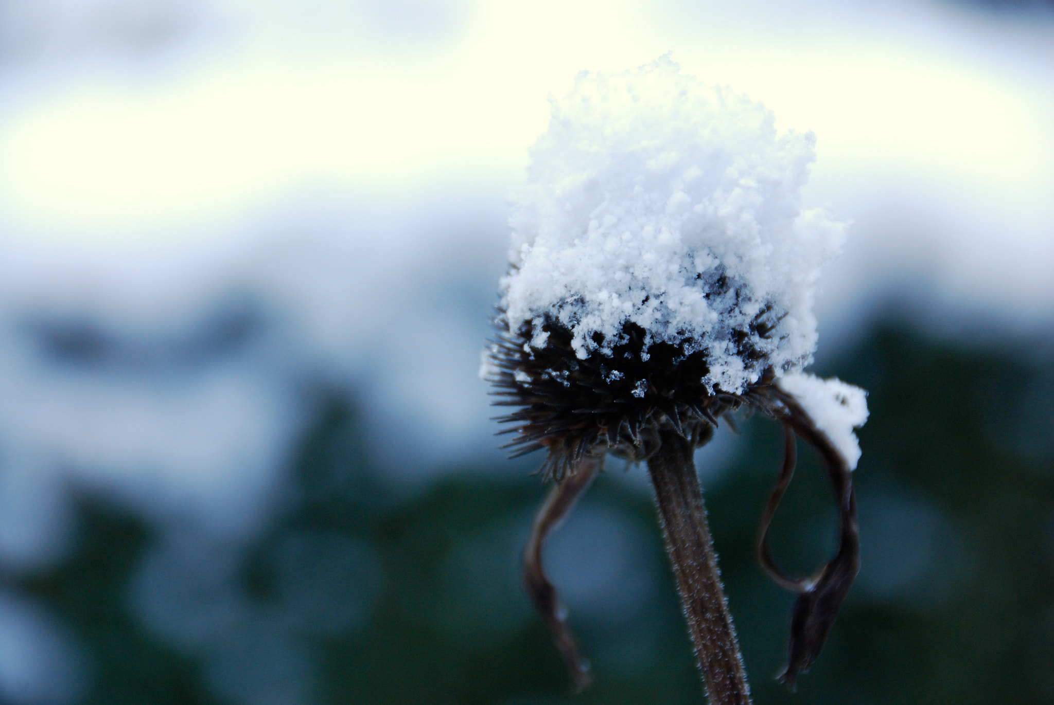 Photograph First snow  by Charlotte Frey on 500px