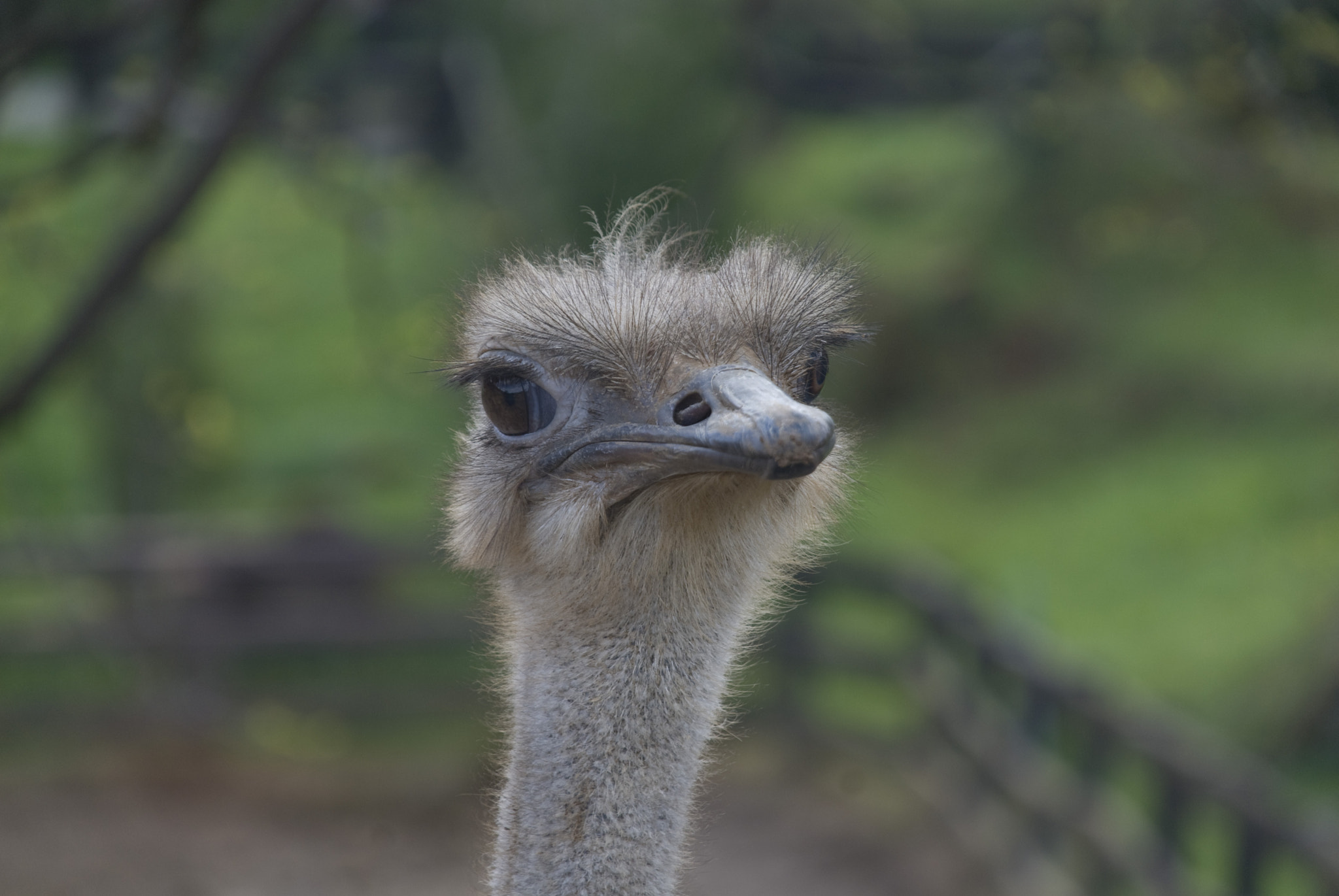 Photograph Ostrich by Cata Ionescu on 500px