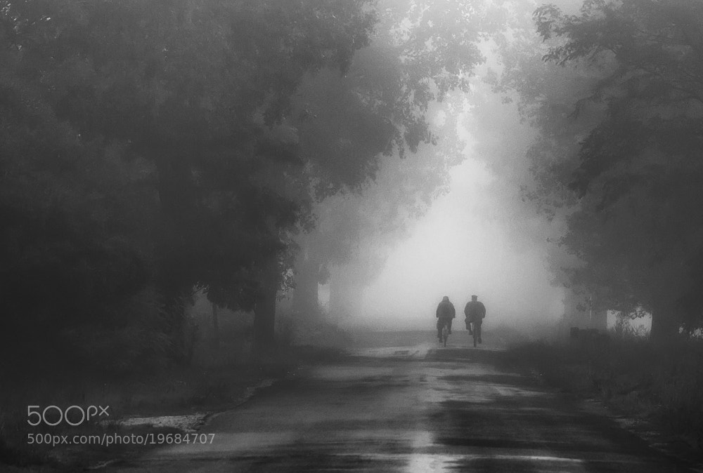 Photograph In the fog by Hober Szabolcs on 500px