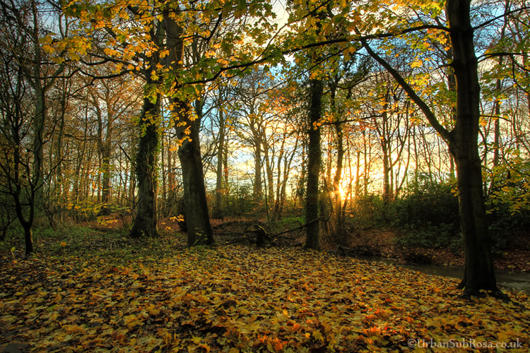 Photograph November by Brian Sayle on 500px
