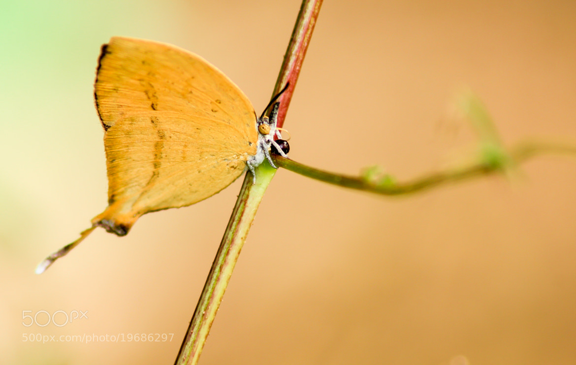 Photograph Butterfly - Single by Man Inthe Street on 500px