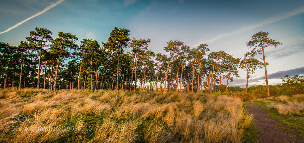 Photograph Galley hill - Sandy by Luminous Impressions on 500px
