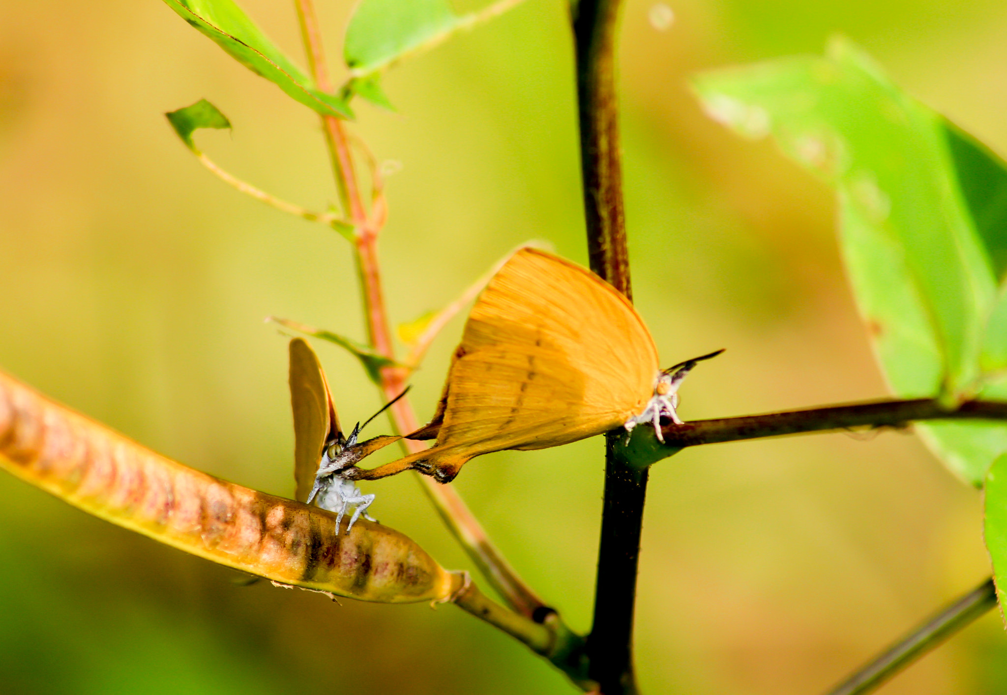 Photograph Butterfly - Couple by Man Inthe Street on 500px