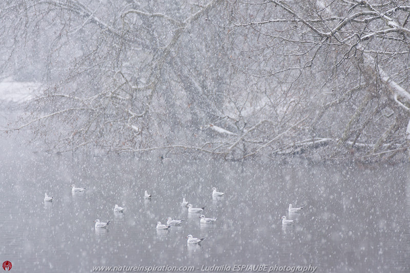 Photograph First snow by Ludmila Espiaube on 500px