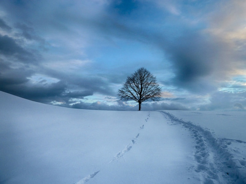 Photograph Do trees feel the cold?  by Frank Henjes on 500px