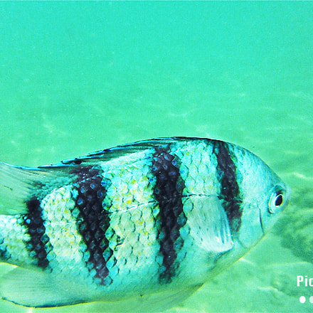Zebra Fish, Fujifilm FinePix XP50