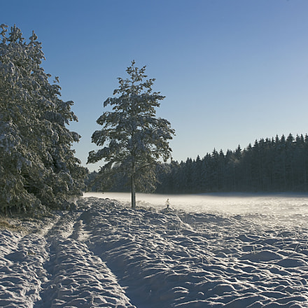 Winter in Kompedal forest., Pentax K20D, smc PENTAX-F 35-105mm F4-5.6
