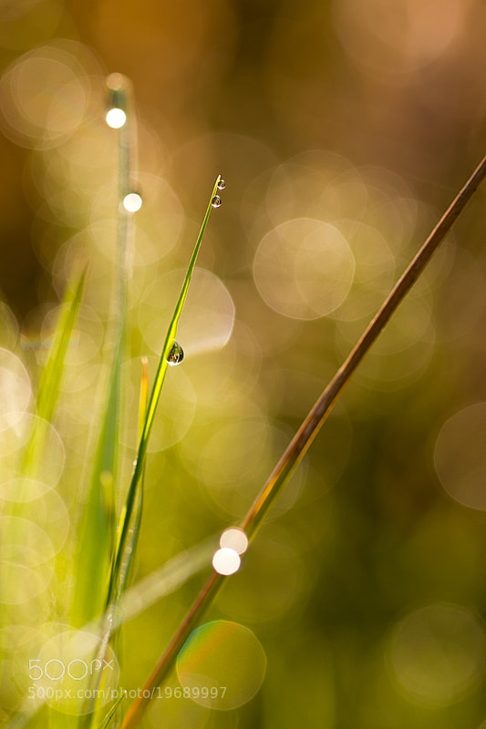 Photograph dew by Martin Florian on 500px