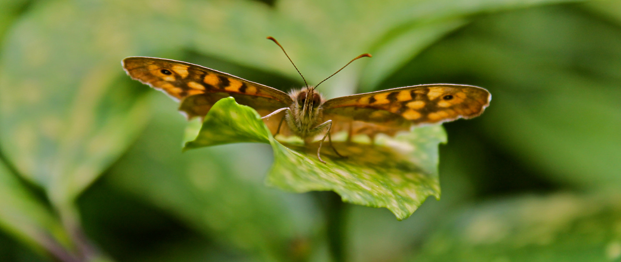 Photograph Butterfly Portrait by Lucas Phototaker on 500px
