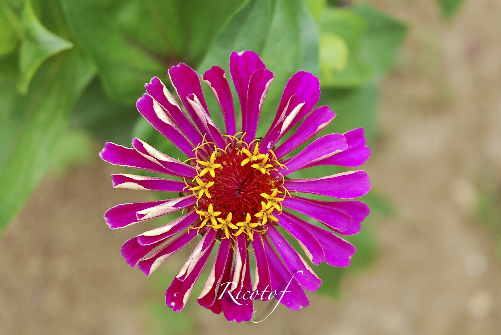 Photograph Flower by RicoPhotography  on 500px