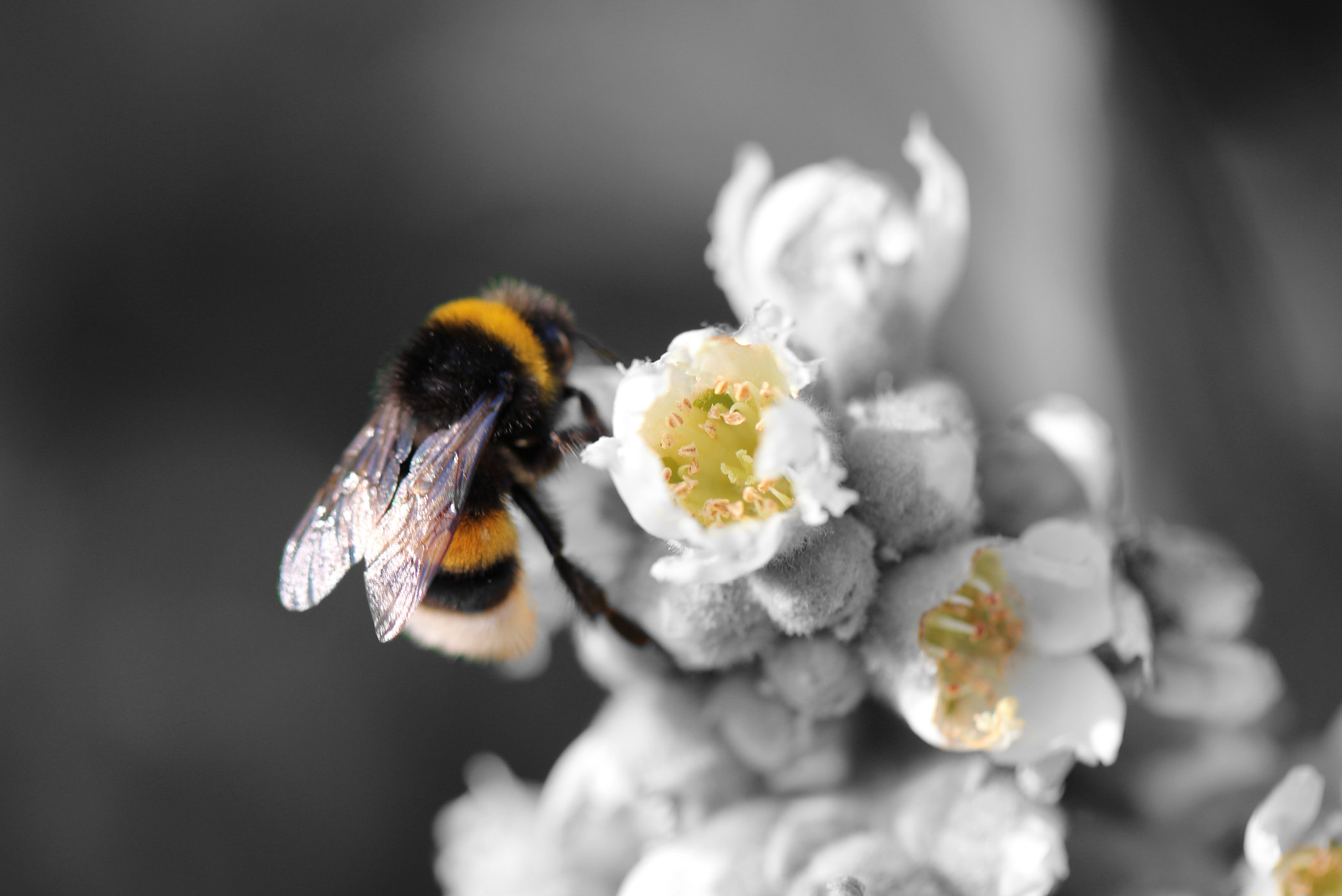 Photograph Bumblebee by Julia H on 500px