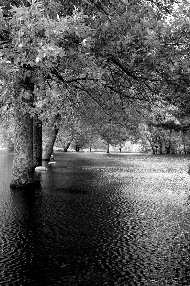 Photograph Flooded Park by Cory Zimmermann on 500px