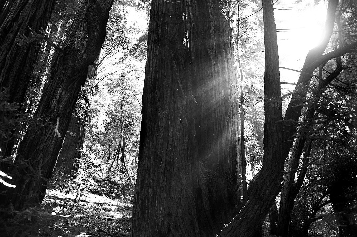Photograph Muir Woods 2 by Cory Zimmermann on 500px