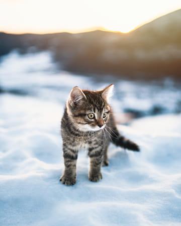 Cat meow side, how bowdah?