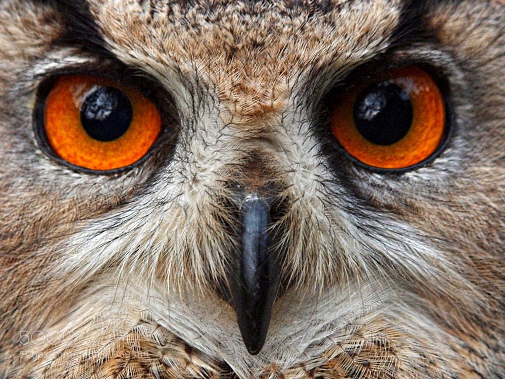 Photograph The Eyes by Irawan Subingar on 500px