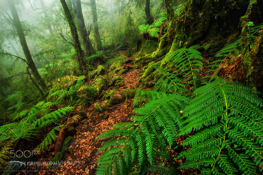 Photograph Prehistoric Forest by Drew Hopper on 500px