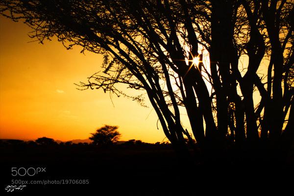 Photograph wildlife by ezzat ezzat on 500px