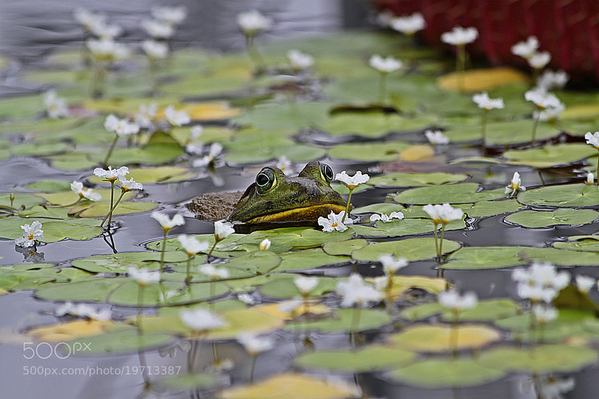 Photograph Perfume Frog! by michelle phenix on 500px