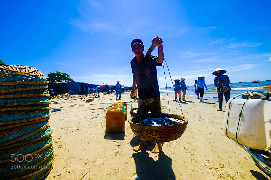 Bringing the Fish, Long Hai, Vietnam