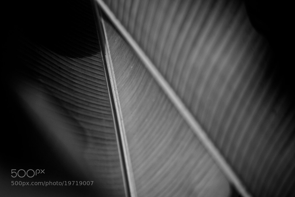 Photograph Pattern on the Banana's Leaf by Zen Designe on 500px