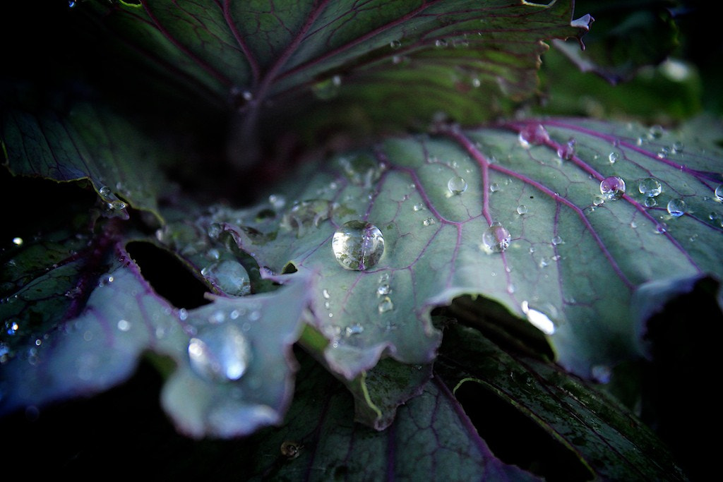 Photograph Water Ball on the Leaf by Zen Designe on 500px