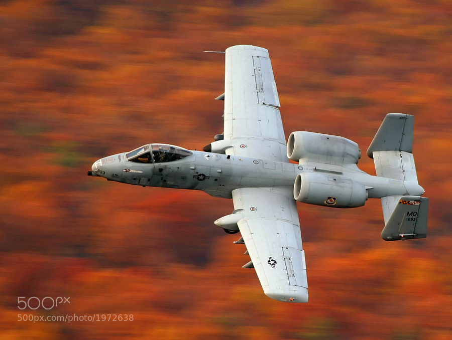 """An A-10 """"Warthog"""" assigned to the Maryland Air National Guard, skims the treetops at the US Army's Bollen Bombing Range, Fort Indiantown Gap, Pennsylvania."""