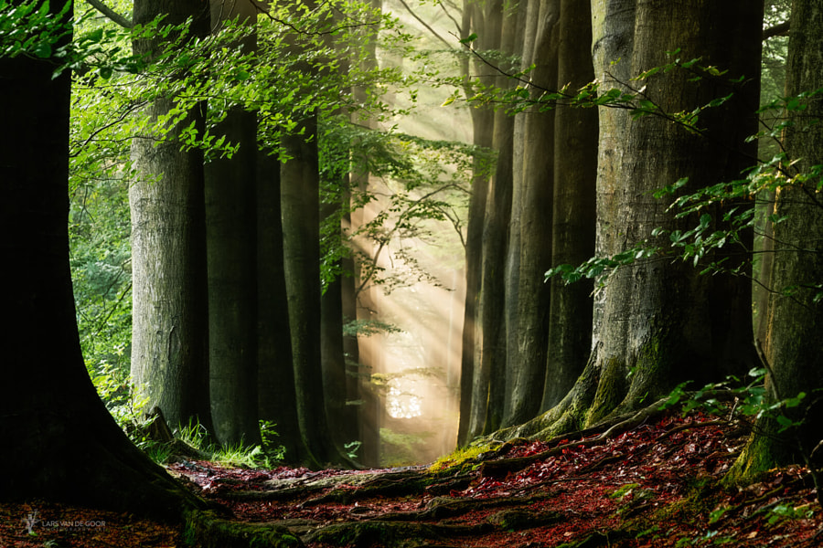 Fairy Funshine by Lars van de Goor on 500px.com