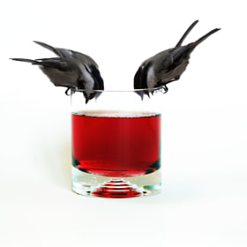 Cocktail by Andre Villeneuve (Andre_Villeneuve)) on 500px.com