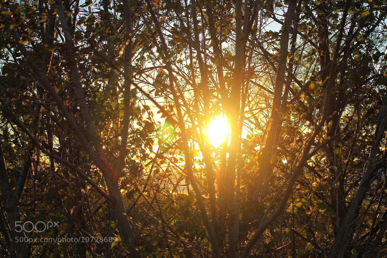 Photograph Coucher de soleil  by richard cauchy on 500px
