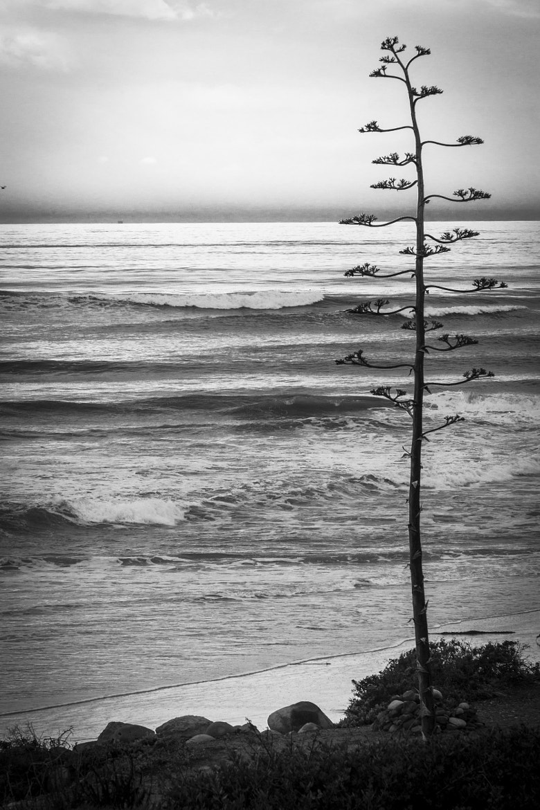 Photograph Beach Tree by Michael T. McNerney on 500px