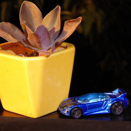 Plant and miniature car, Sony DSC-H100