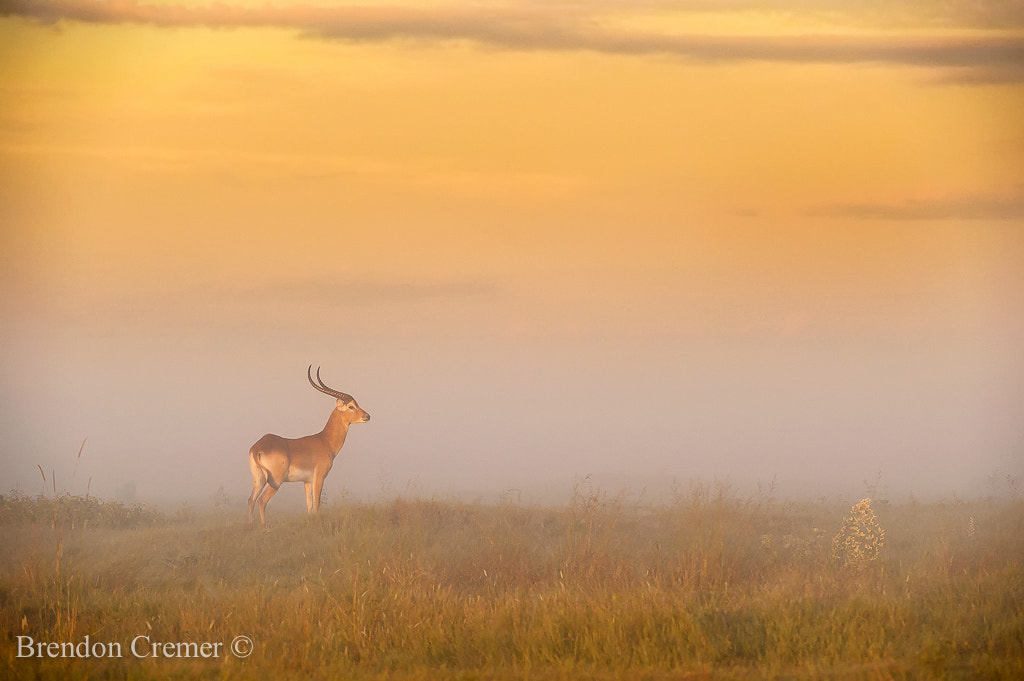 Photograph Colours of the Okavango by Brendon Cremer on 500px