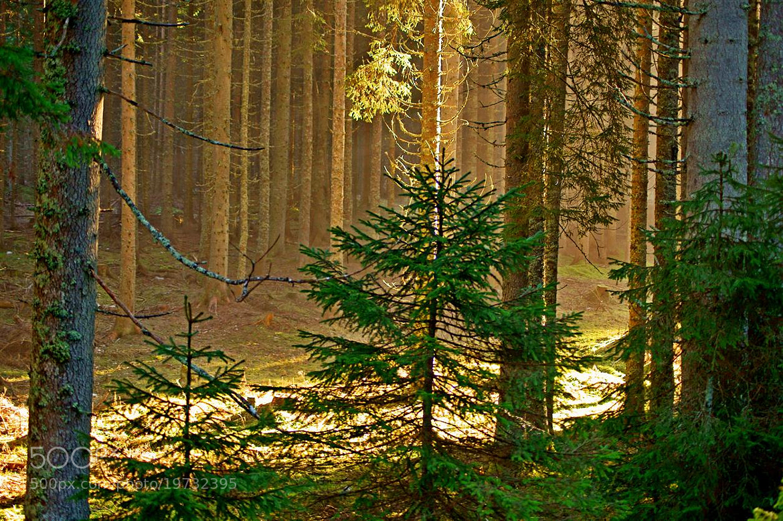 Photograph golden green moment by Edvard - Badri Storman on 500px