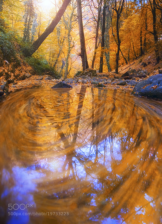 Photograph Autumn Circle  by Morteza Safataj on 500px